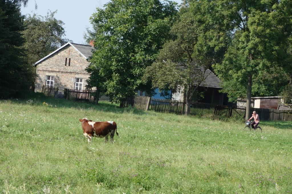Krajobrazy zakola Wisły w Gromcu